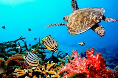 Snorkeling - www.zanzibar.co.za
